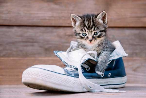 Чем убрать запах мочи кота с обуви