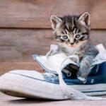 Что делать, когда обувь становится кошачьим лотком