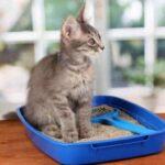 Пошаговая инструкция как приучить кошку к лотку