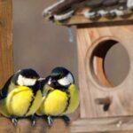 Как сделать кормушку для птиц своими руками из подручных материалов (фото МК)