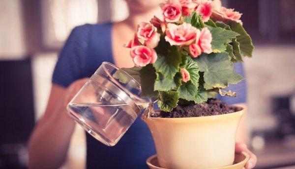 Цветы для увлажнения воздуха в квартире